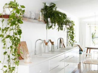 plants on top of kitchen cabinets